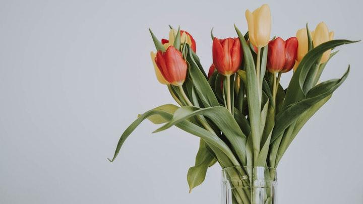 tulipanes-para-decoracion-clasica